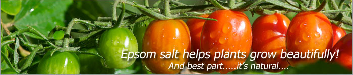 Epsom Salt Fertilizer - Great for feeding your plants for optimal growth