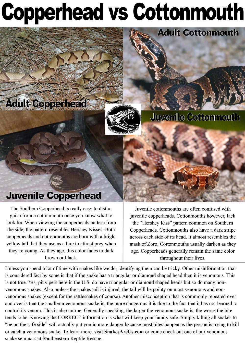 SnakesAreUs.com